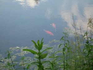 Fisch(4)